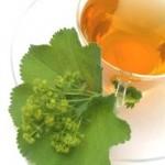 Virak – gospin plašt : čaj od virka