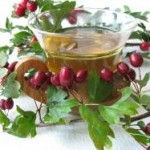 Glog lekovitost čaj od gloga