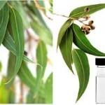 Eukaliptus lekovitost ulje