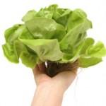 Zelena salata lekovito delovanje