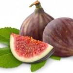 Smokve – Sveto stablo rajske voćke
