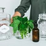 Tinktura – kapi od koprive upotreba za anemiju, kosu, u trudnoći…