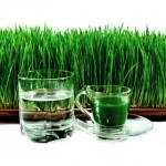 Pšenična trava – Sok od pšenične trave