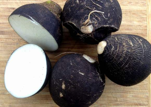 Crna rotkva i med kao lek, recepti za kašalj, bronhitis