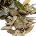 Lovorov list kao lek protiv kašlja, akni, bubuljica za lepu kosu i lice