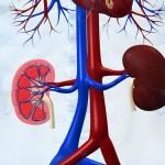 Uremija bolest bubrega simptomi, lečenje, prirodni lekovi