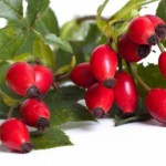 Šipak – vitaminska bomba