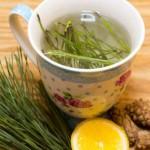 Borove iglice kao lek za kašalj, bronhitis, sinuse – Čaj od borovih iglica