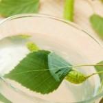 Čaj od breze lekovitost