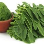 Moringa prah: Ova biljka leči 5 tipova kancera jajnika, uključujući jetru, pluća i melanom