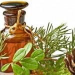 Sirup (med) od borovih iglica kao lek za kašalj i bronhitis – recept