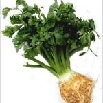Celer kao lek