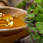 Čuvarkuća i med kao lek za ciste, miome, gastritis – recept