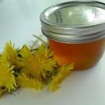 Sirup – med od maslačka recepti za dobro zdravlje