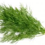 Mirođija i zdravlje – seme, lišće, ulje