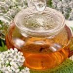 Čaj od virka i hajdučke trave upotreba i priprema