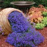 Cveće lobelija uzgoj, sadnja, nega