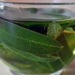 Čaj, tinktura vino i ulje od žalfije