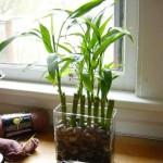 Bambus ukras u bašti i domu – gajenje, sadnja, zalivanje