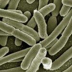 Klebsiella u urinu – kako se prenosi i leči ova bakterija
