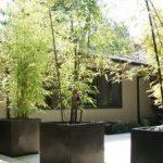 Kako se uzgaja bambus u vrtu i saksiji – sretni bambus biljka koju mnogi žele