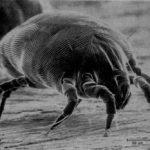 Alergija na grinje: Prava posteljina može biti najbolje rešenje