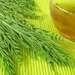 Čaj od rastavića priprema i upotreba za kamen u bubregu, kosu, nokte…