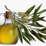 Ulje čajnog drveta (čajevca) upotreba i efektivnost