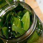 Lovorovo ulje – upotreba, lekovita svojstva, recept
