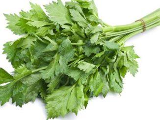 celer list i zdravlje