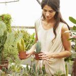 Sukulenti – biljke koje su najlakše za uzgoj