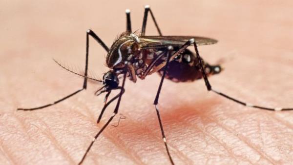 alergija na komarce