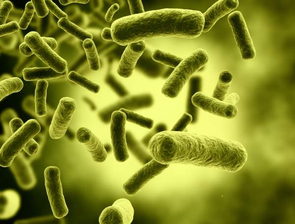 eserihija coli
