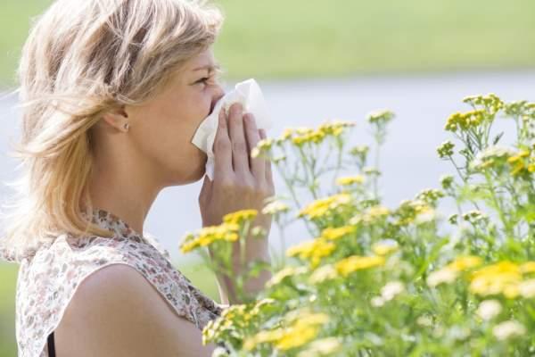 alergijski rinitis polenska groznica