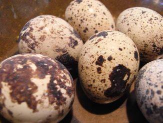 jaja od prepelice