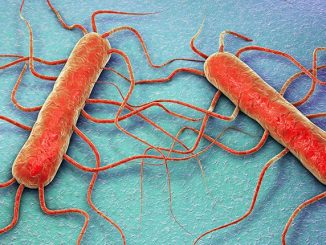bakterija listerija