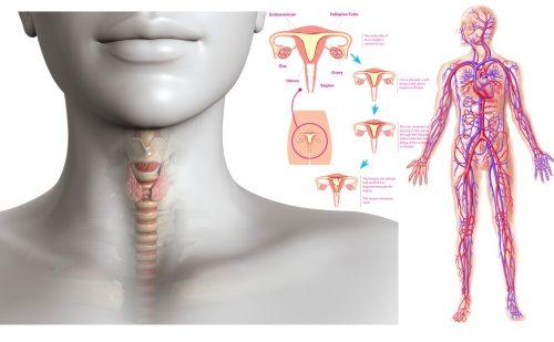 stitna zlezda simptomi